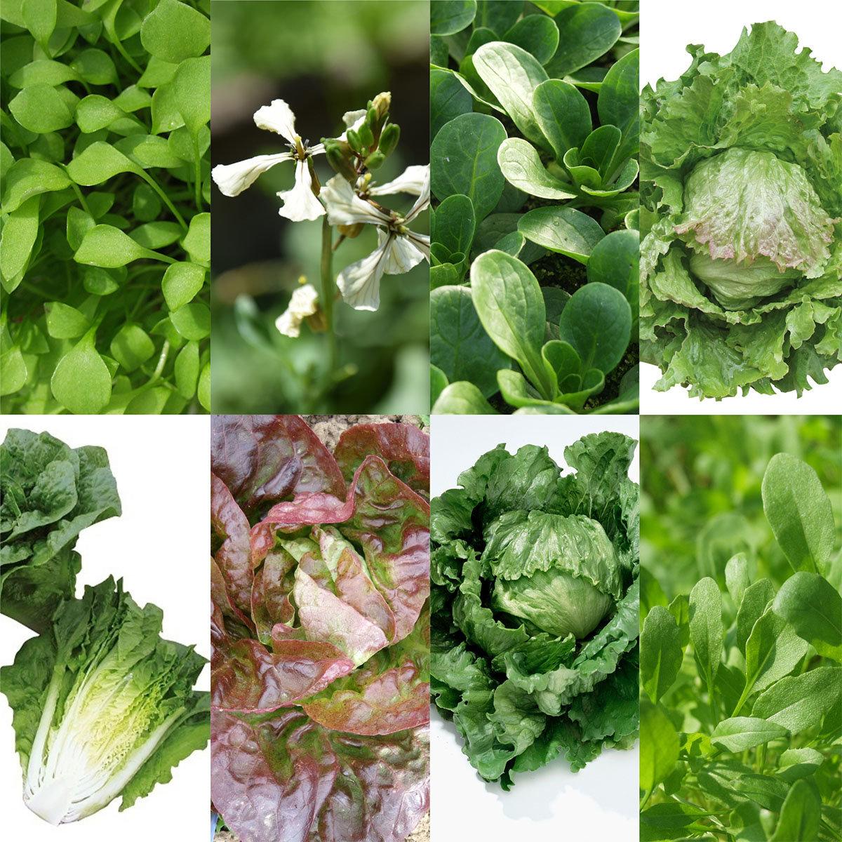Saatgut-Holzbox Salatvielfalt, 7 Saatgut-Sorten | #2
