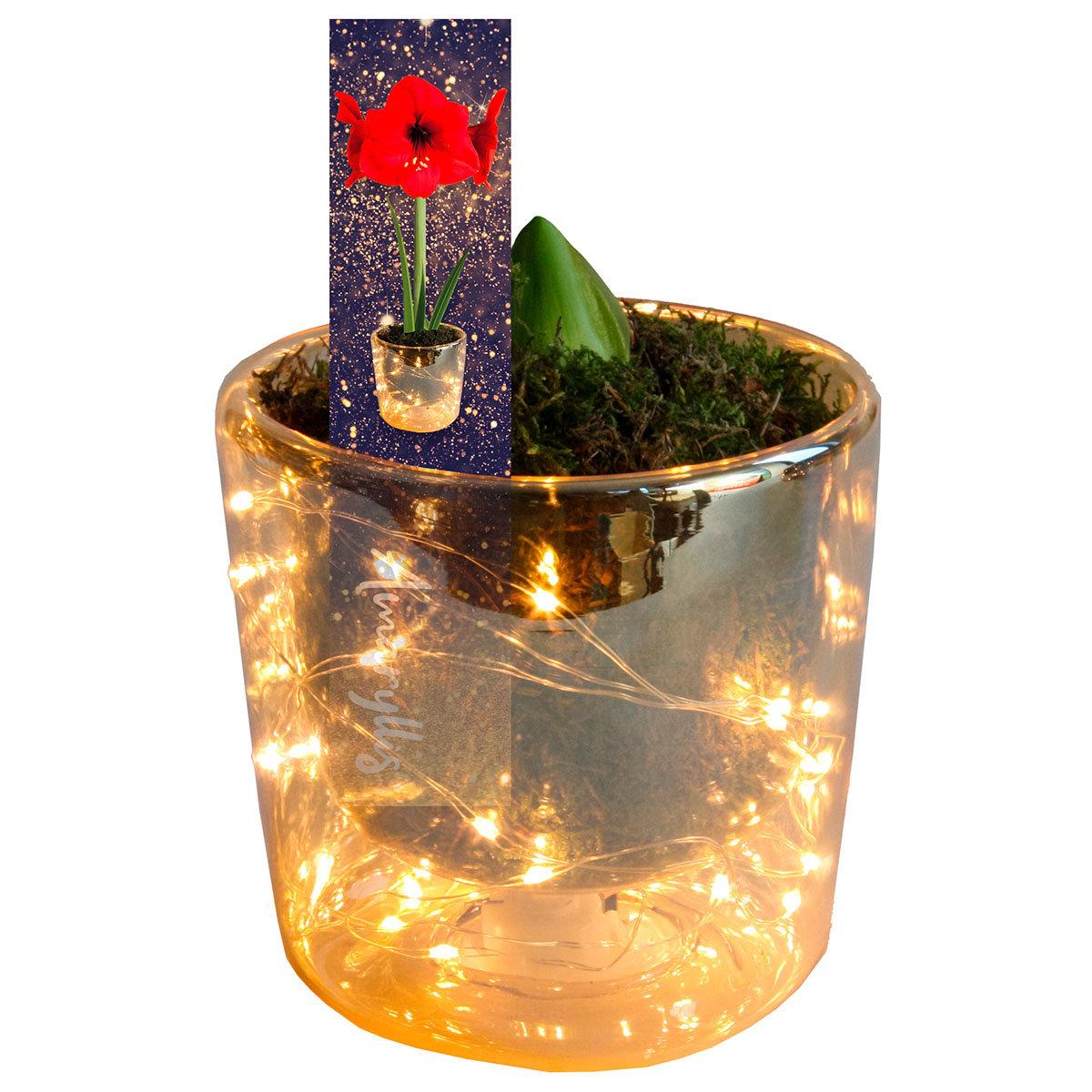 Amaryllis-Set: Amaryllis, Acrylglas-Vase, Moos, LED-Lichterkette, mit Batterien | #2