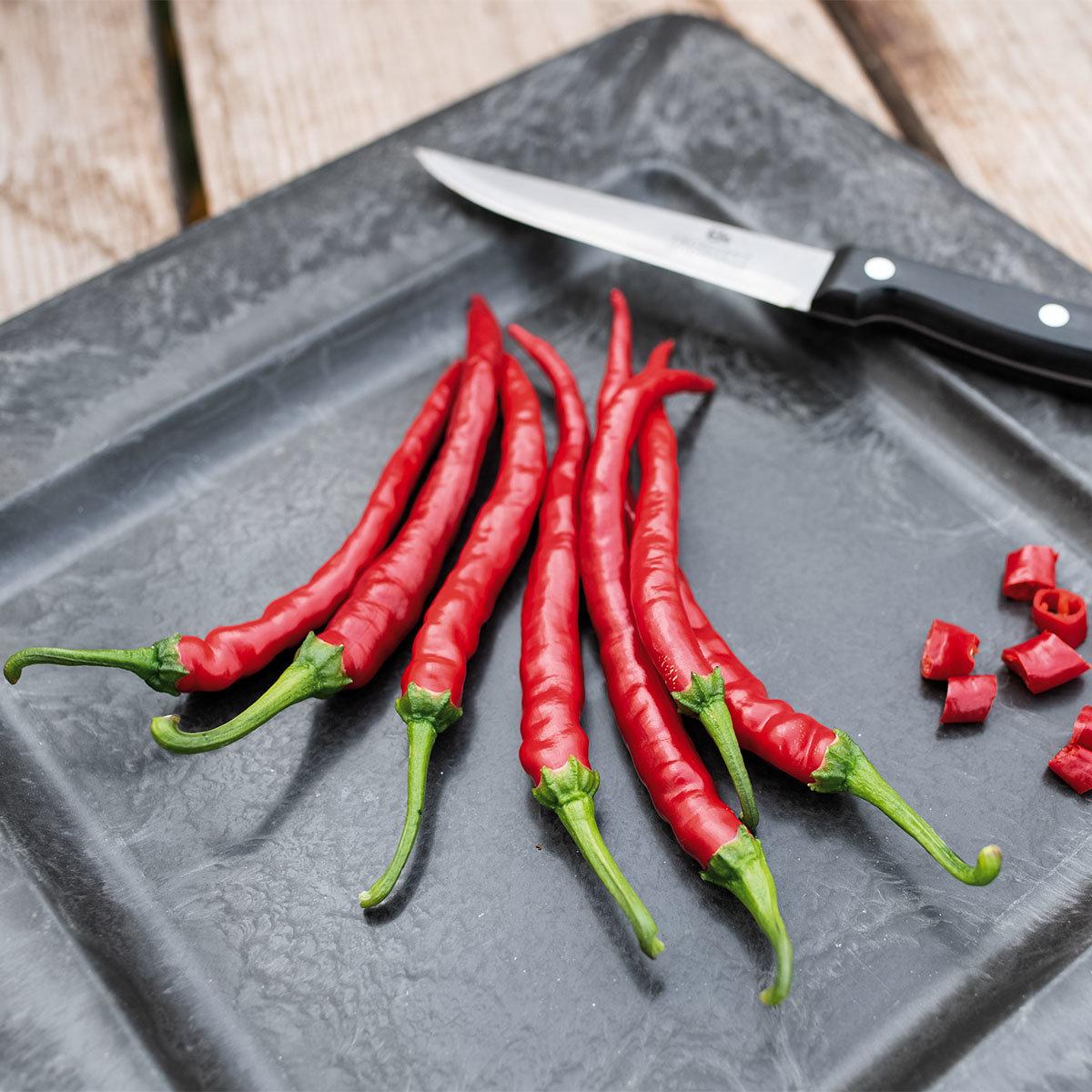 Chili-Paprikasamen Cayenne, Langer Roter   #2