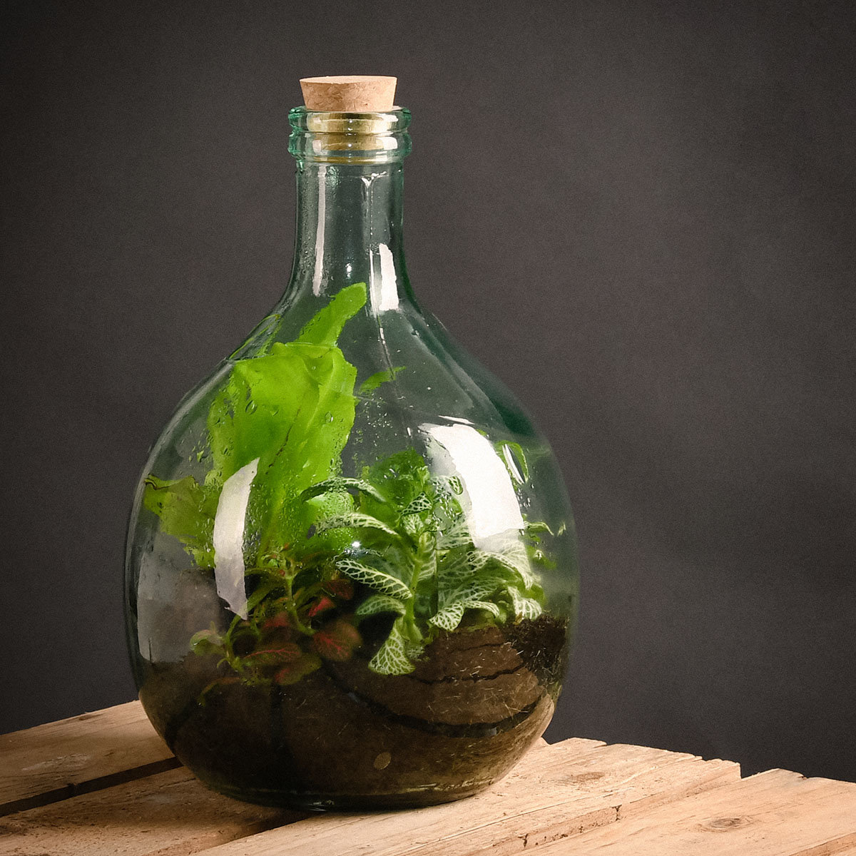 DIY Terrariumflasche Komplettset, 5 Liter | #2