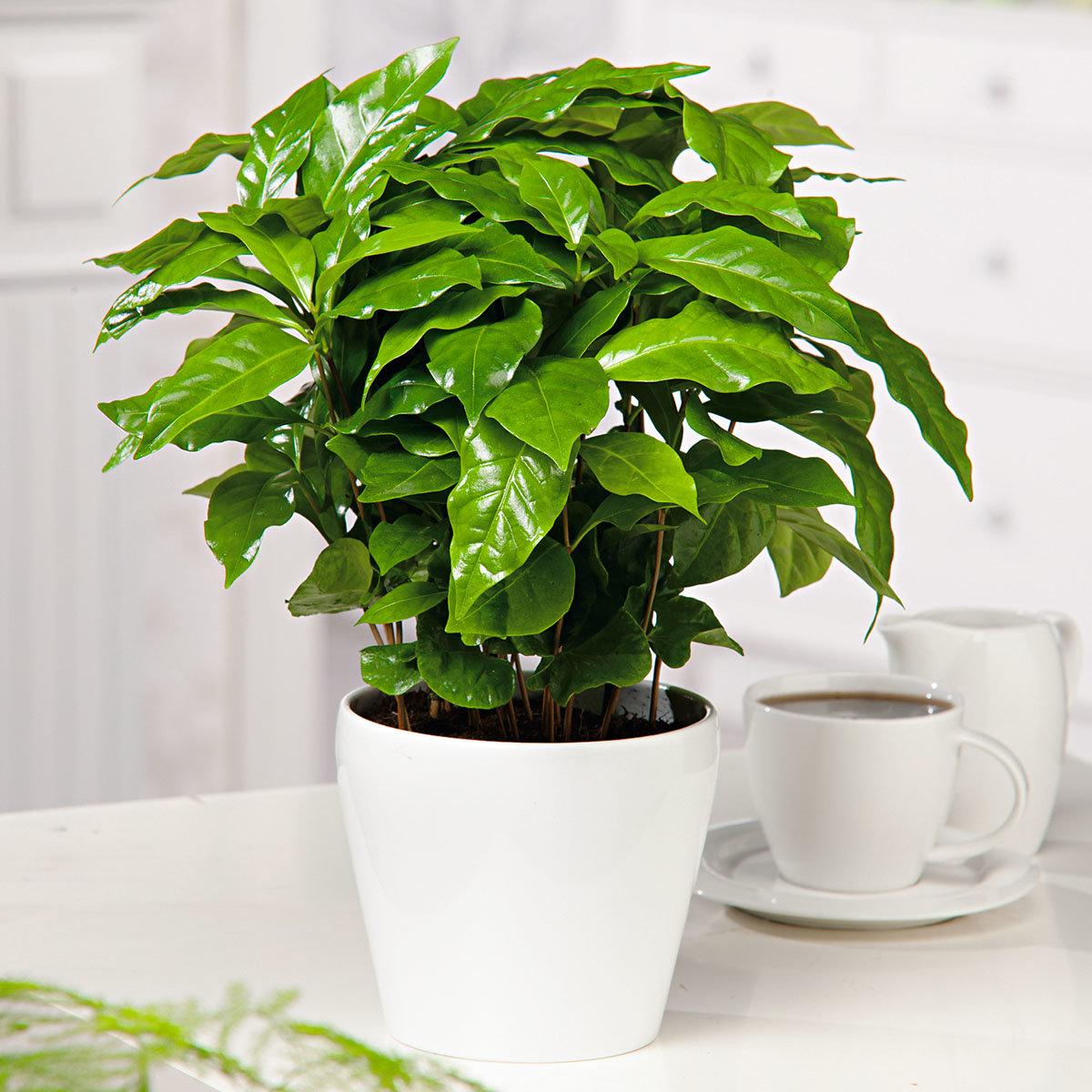Genießer-Set Allgäuer Bergkaffee mit 4 Portionen Kaffee | #2