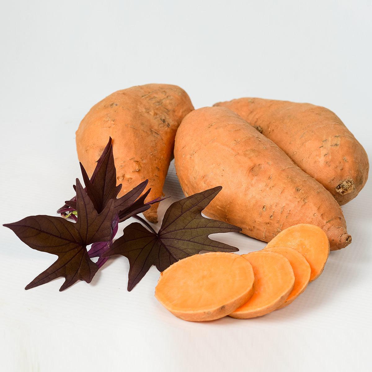 Süßkartoffelpflanze Manihi, im ca. 13 cm-Topf | #2