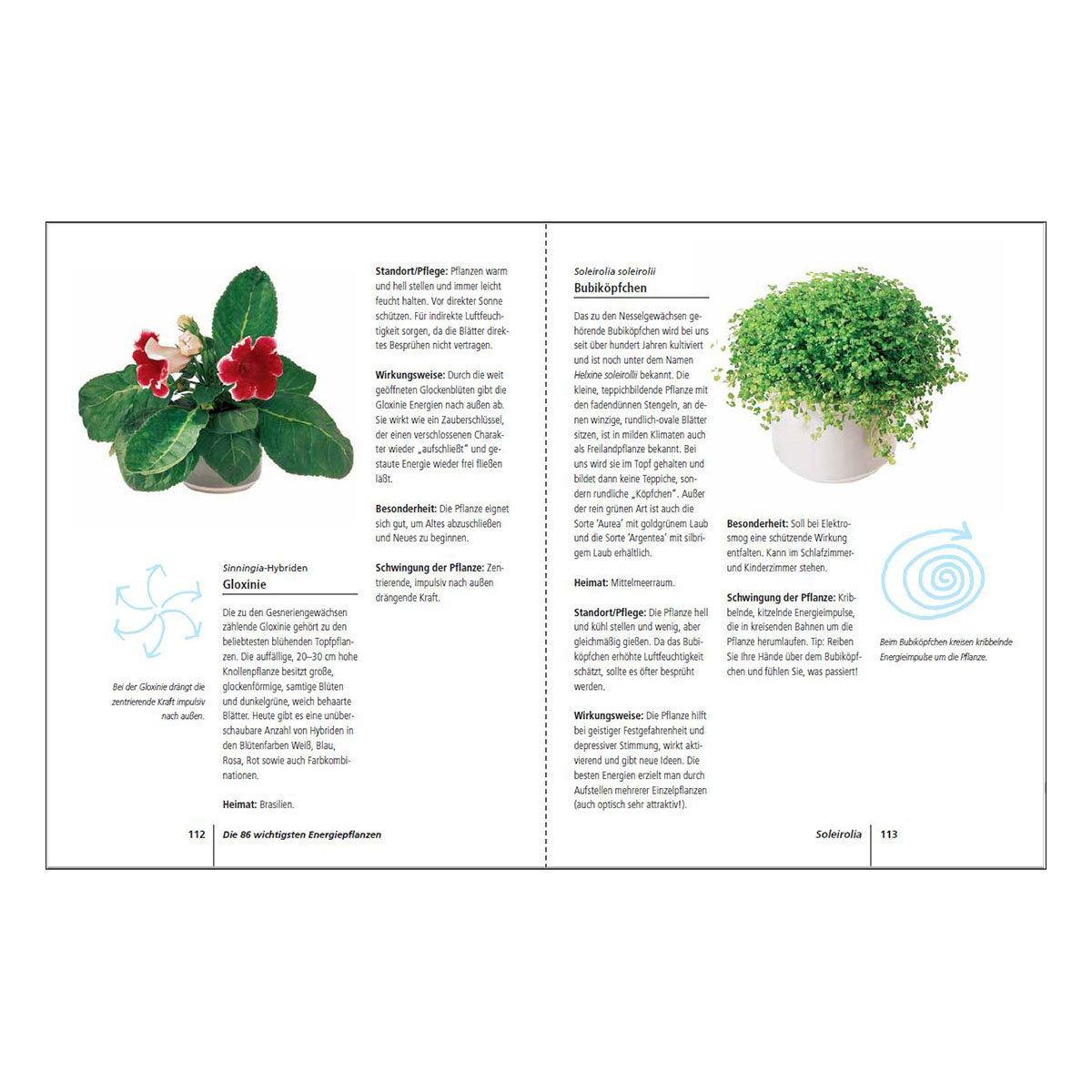 Positive Energie mit Zimmerpflanzen | #2