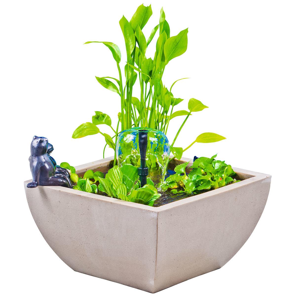 Wassergarten, Miniteich-Komplett-Set mit Pumpe, creme-weiss | #2