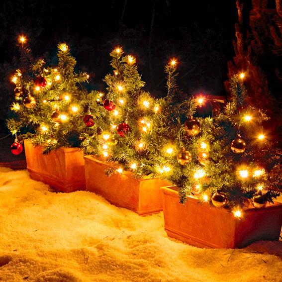 Weihnachtstannen Lichterglanz, 6er-Set | #2