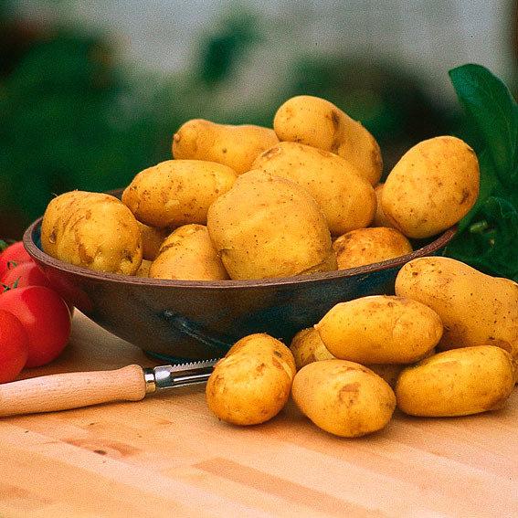 Gärtner Pötschke Pflanzenfutter für Kartoffeln, 5 kg | #2