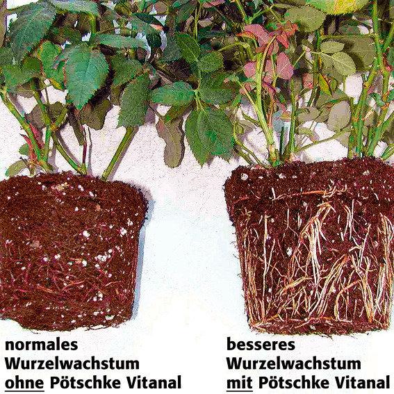 Gärtner Pötschke Vitanal für Rosen, 1 Liter | #2