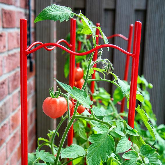 Tomaten-Rankgitter XXL, 3-teilig, Höhe 236 cm | #2