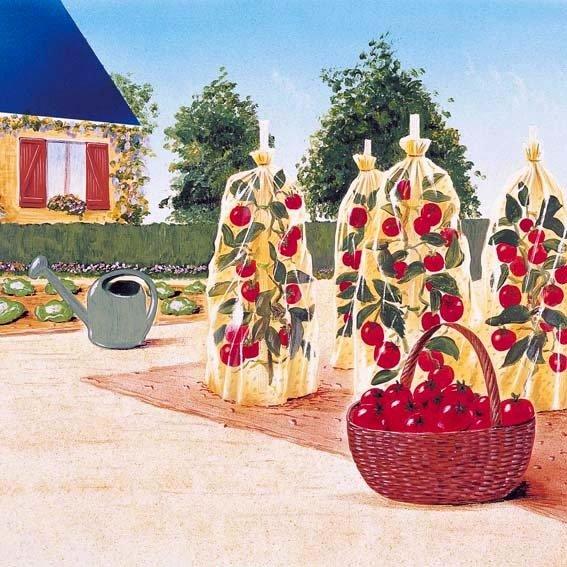 Tomatenreifehauben, 10 x 0,65 m-Schlauch | #2