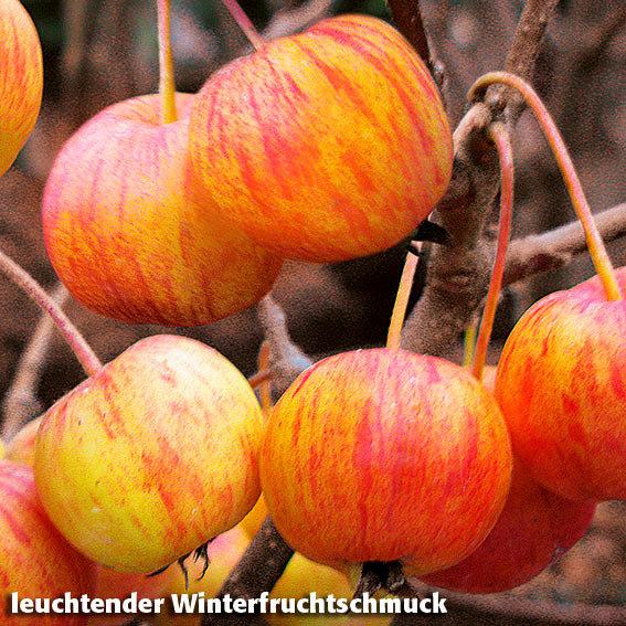 Vogelfutter-Baum | #2