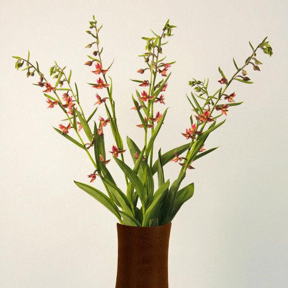 Stendelwurz-Orchidee Sabine | #2