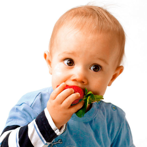Erdbeere Sweet Mary®, getopft | #2