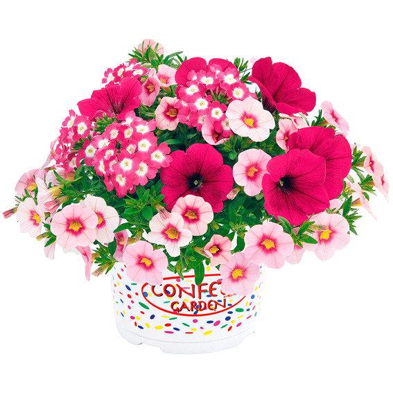 Trio-Fix Confetti Garden Hot Pink Jazz | #2