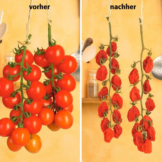 Tomatenpflanze Tomaccio | #2