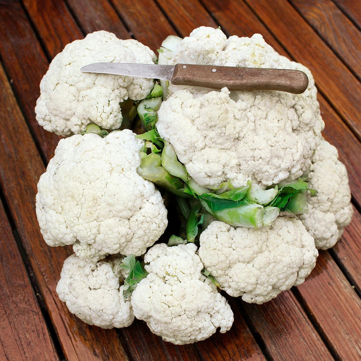 Gemüse-Pflanze Blumenkohl Multi-Head F1 | #2