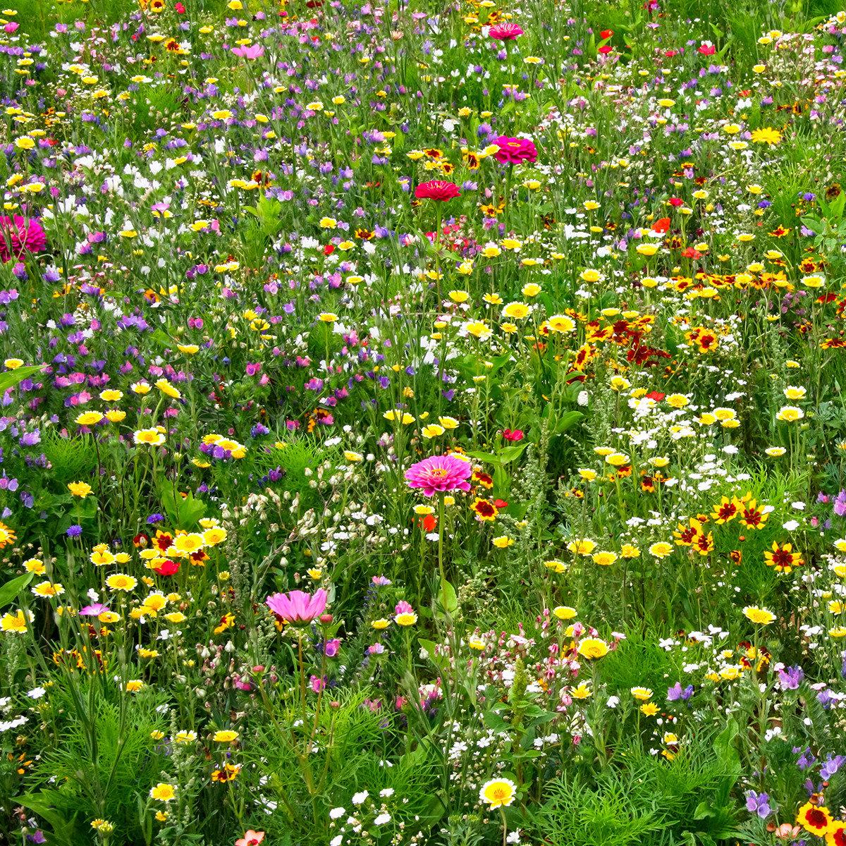 Blumen-Saat-Teppich 0,20 x 3 m, Bunte Bienenweide | #2