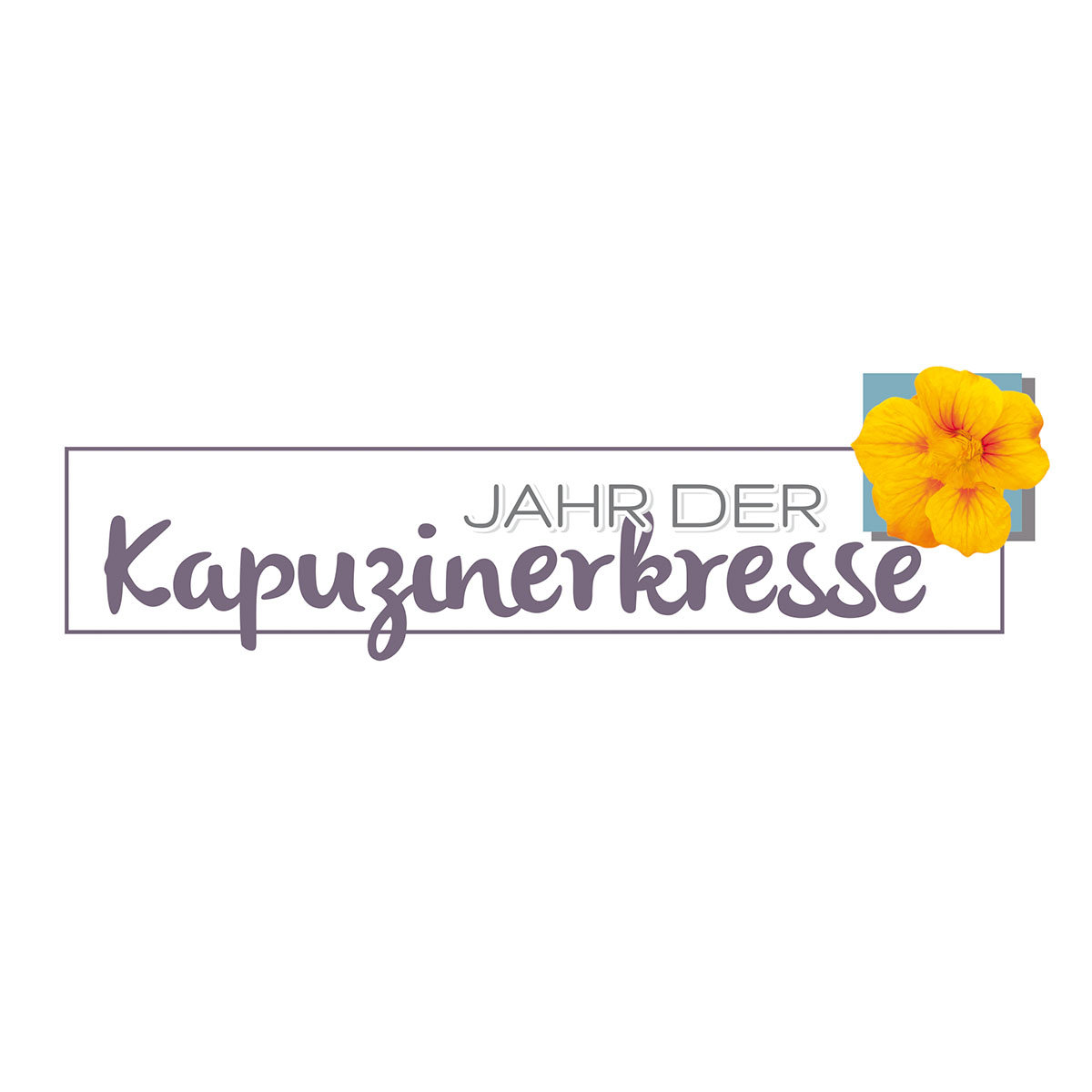 Kapuzinerkressesamen Purple Emperor | #2