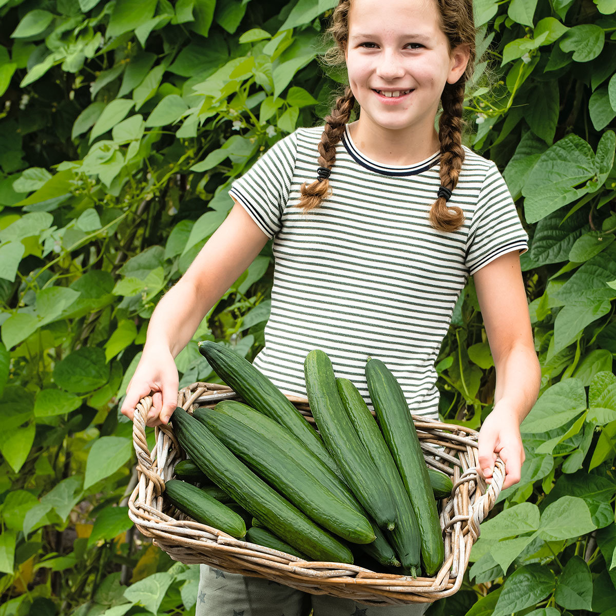 Gurkenpflanze Loustik, veredelt, im ca. 11 cm-Topf | #3
