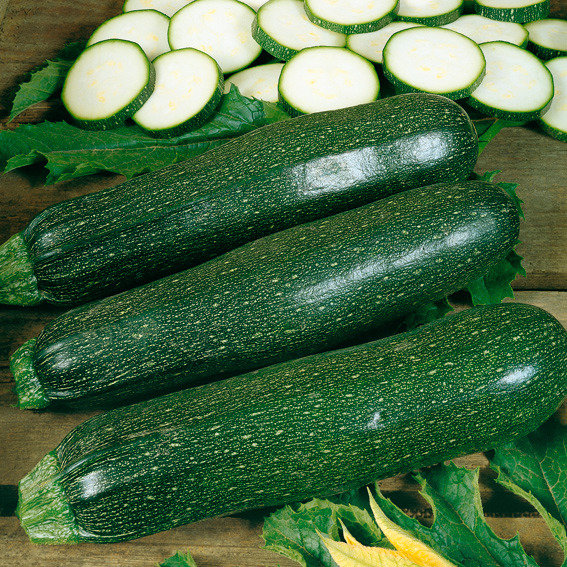 Seedcell Zucchini, 8 Seedcells   #3