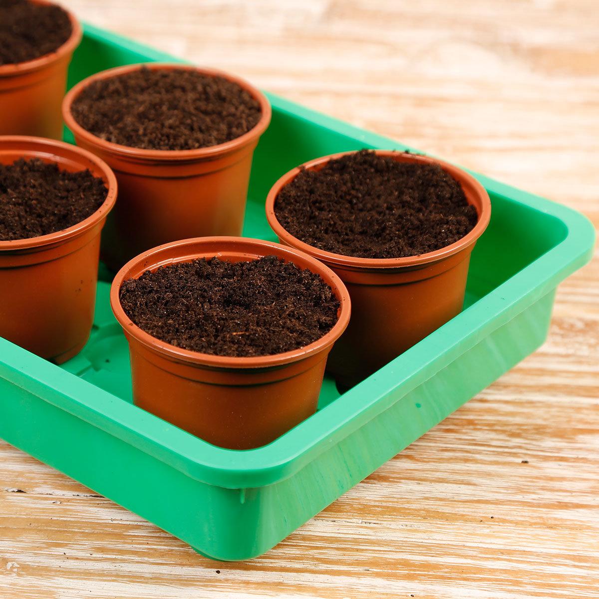 Balkon-Gemüse Anzucht-Set | #3