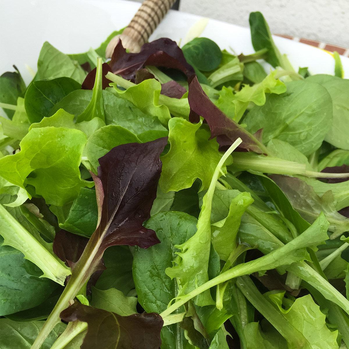 Saatplatten-Set Salatvielfalt, Hochbeet - und Balkonsalate | #3