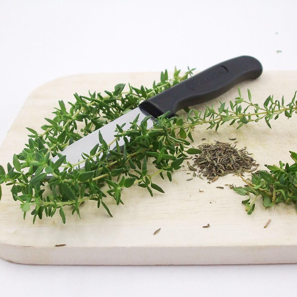 Kräuterpflanze Sonnen-Thymian Goldy, im ca. 12 cm-Topf | #3