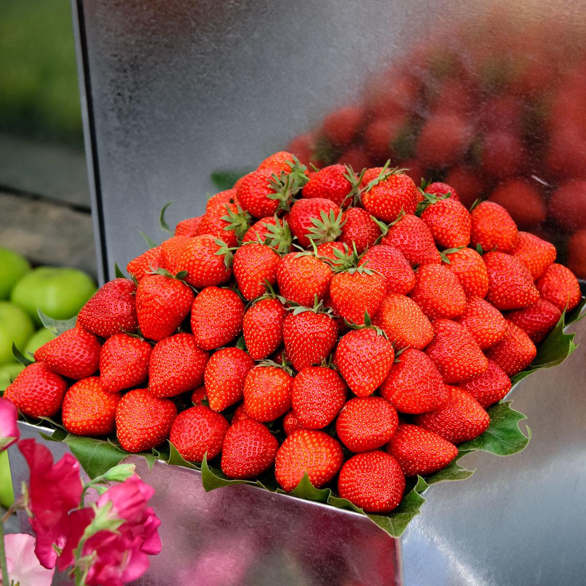 Sortiment Köstliche Erdbeersorten, im ca. 9 cm-Topf | #3