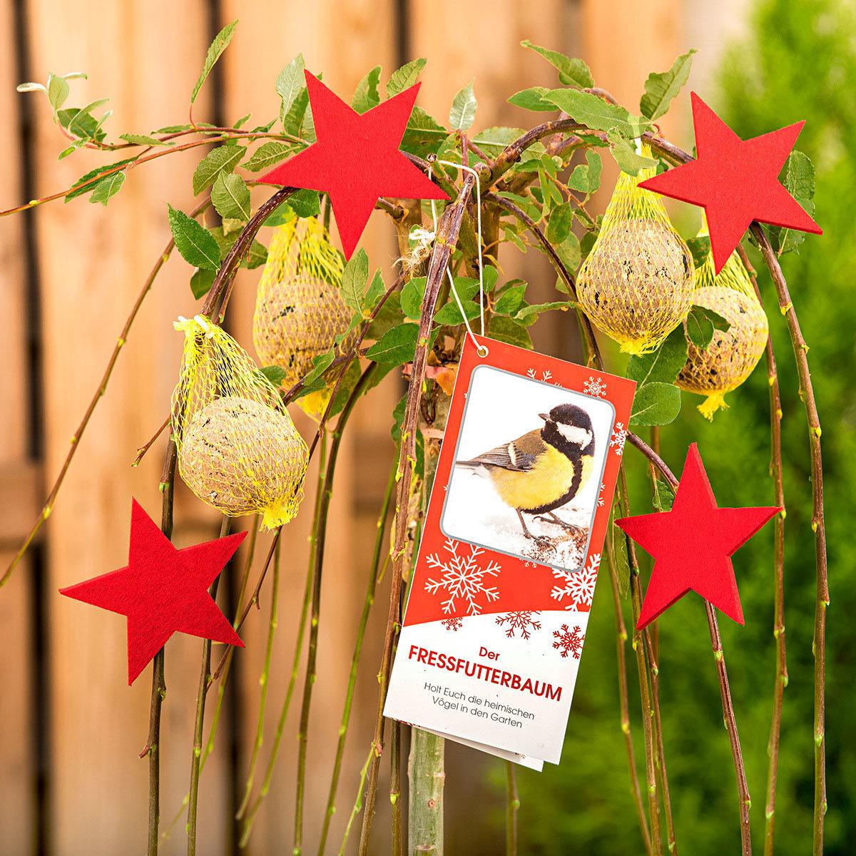 Vogelfutterbaum, im ca. 23 cm-Topf | #3