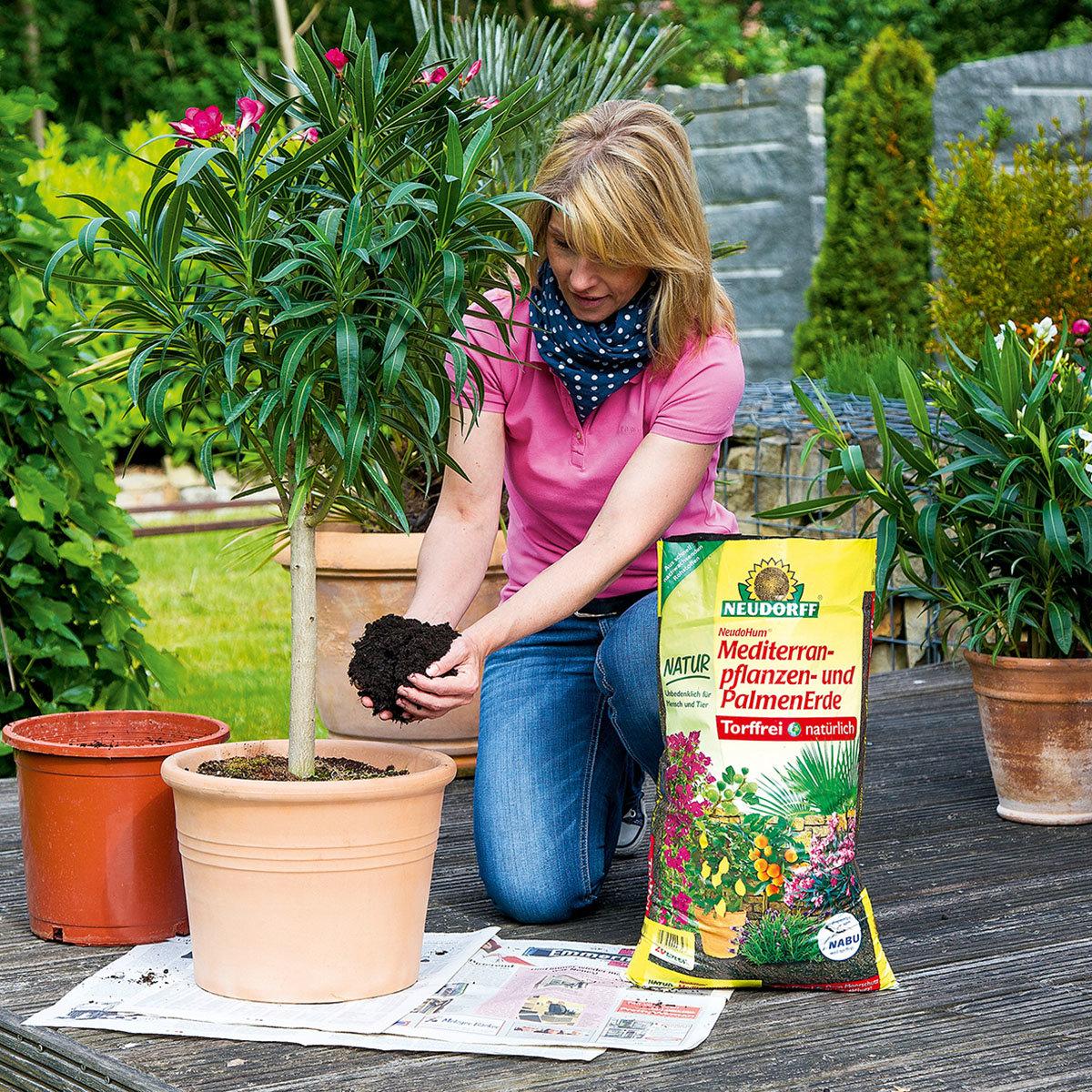 NeudoHum® Mediterranpflanzen- und Palmenerde, 10 Liter   #3