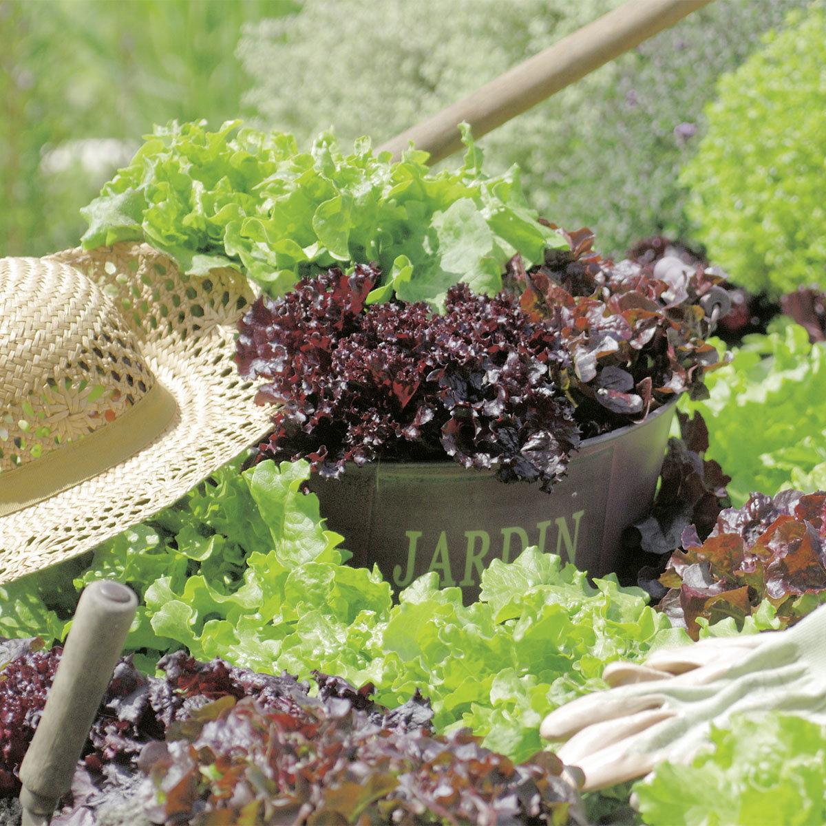 Saatgut-Holzbox Salatvielfalt, 7 Saatgut-Sorten | #3