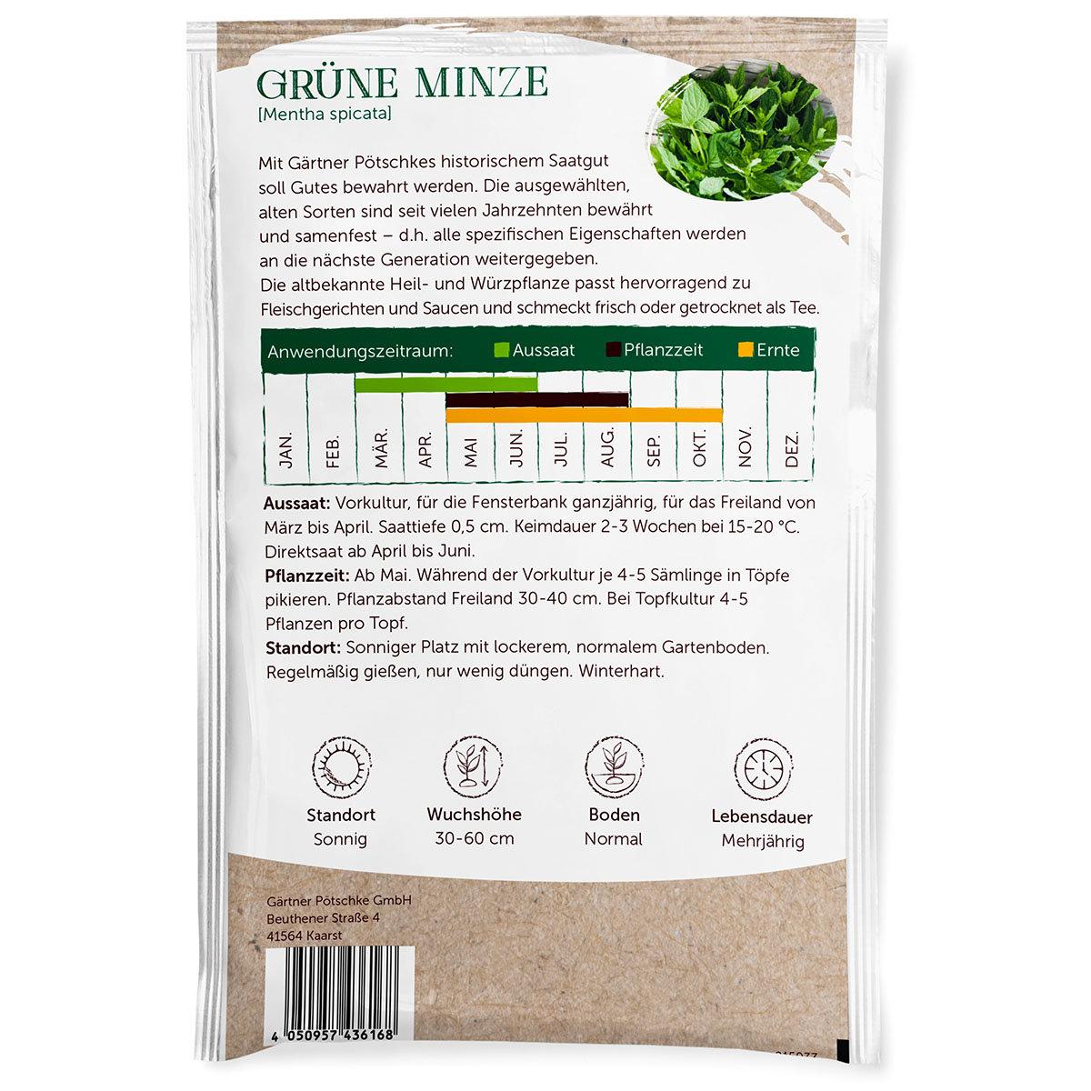Minzesamen Grüne Minze   #3