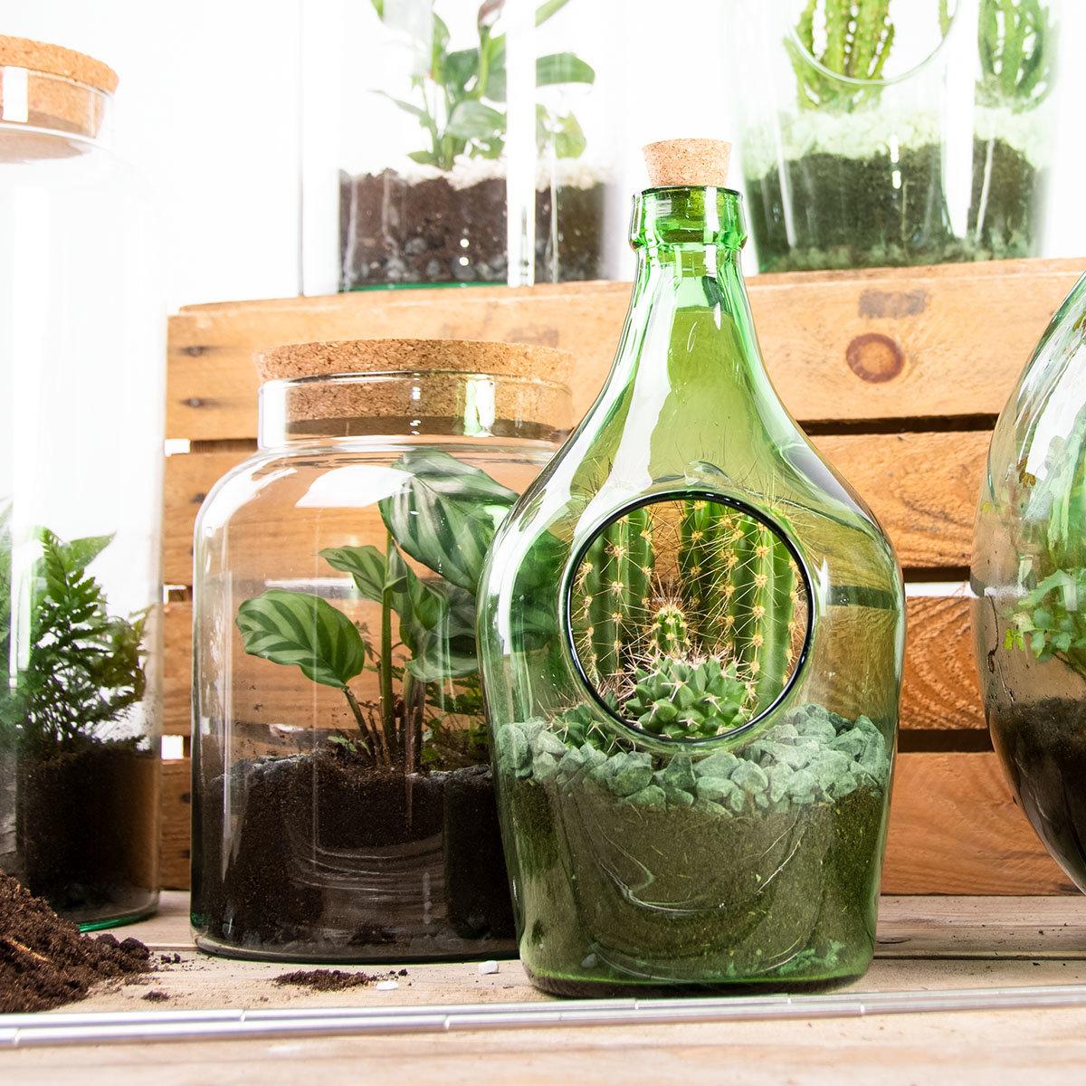 DIY Terrariumflasche mit Seitenöffnung, Komplettset, 3 Liter | #3