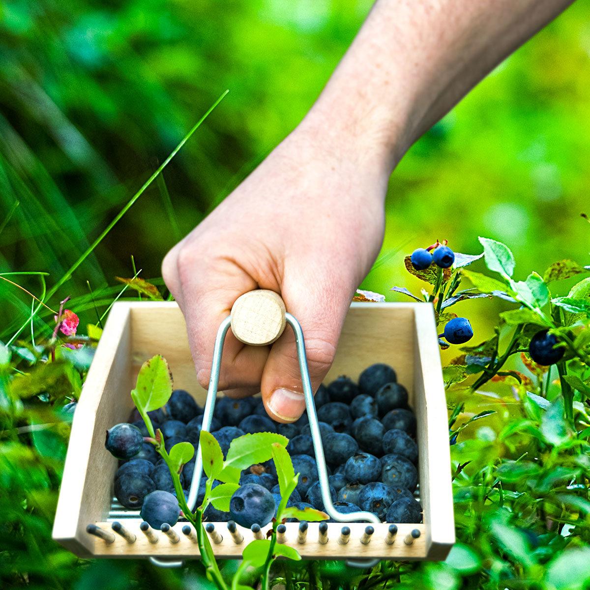 Beerenpflücker Ernteglück, Buchenholz | #3