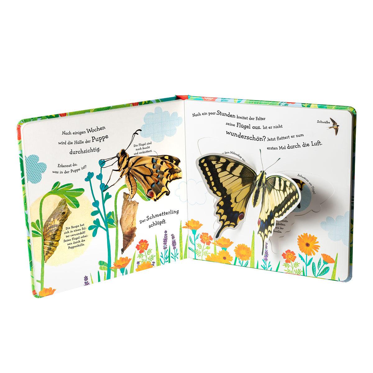 Wie wird die Raupe zum Schmetterling? | #3