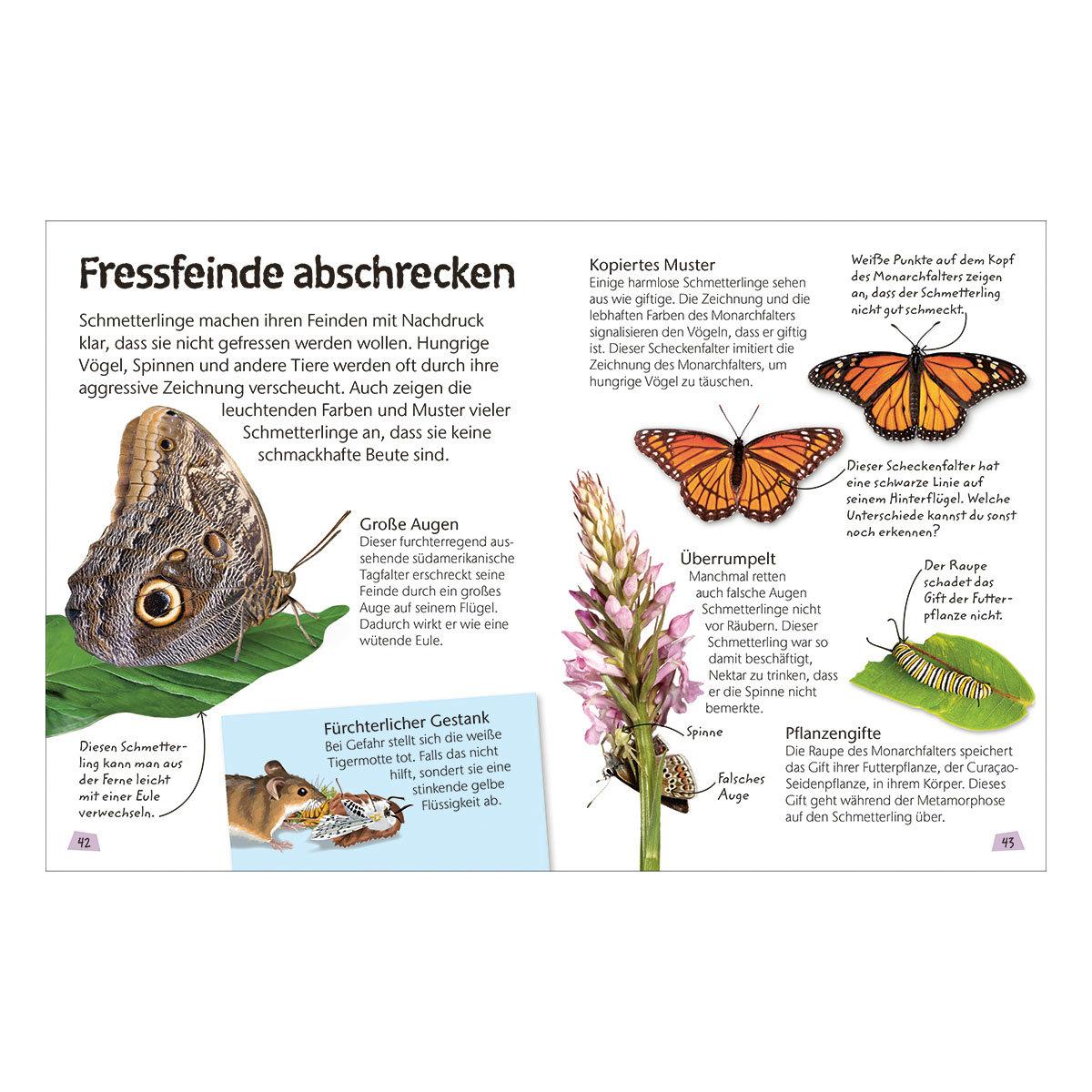 Naturführer für Kinder - Schmetterlinge   #3