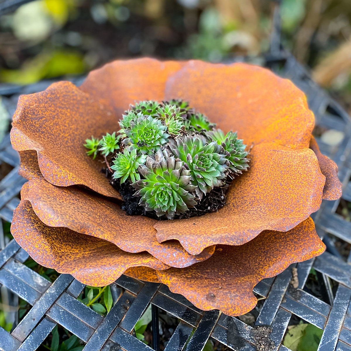 Blume Blütenzauber, Edelrost | #3