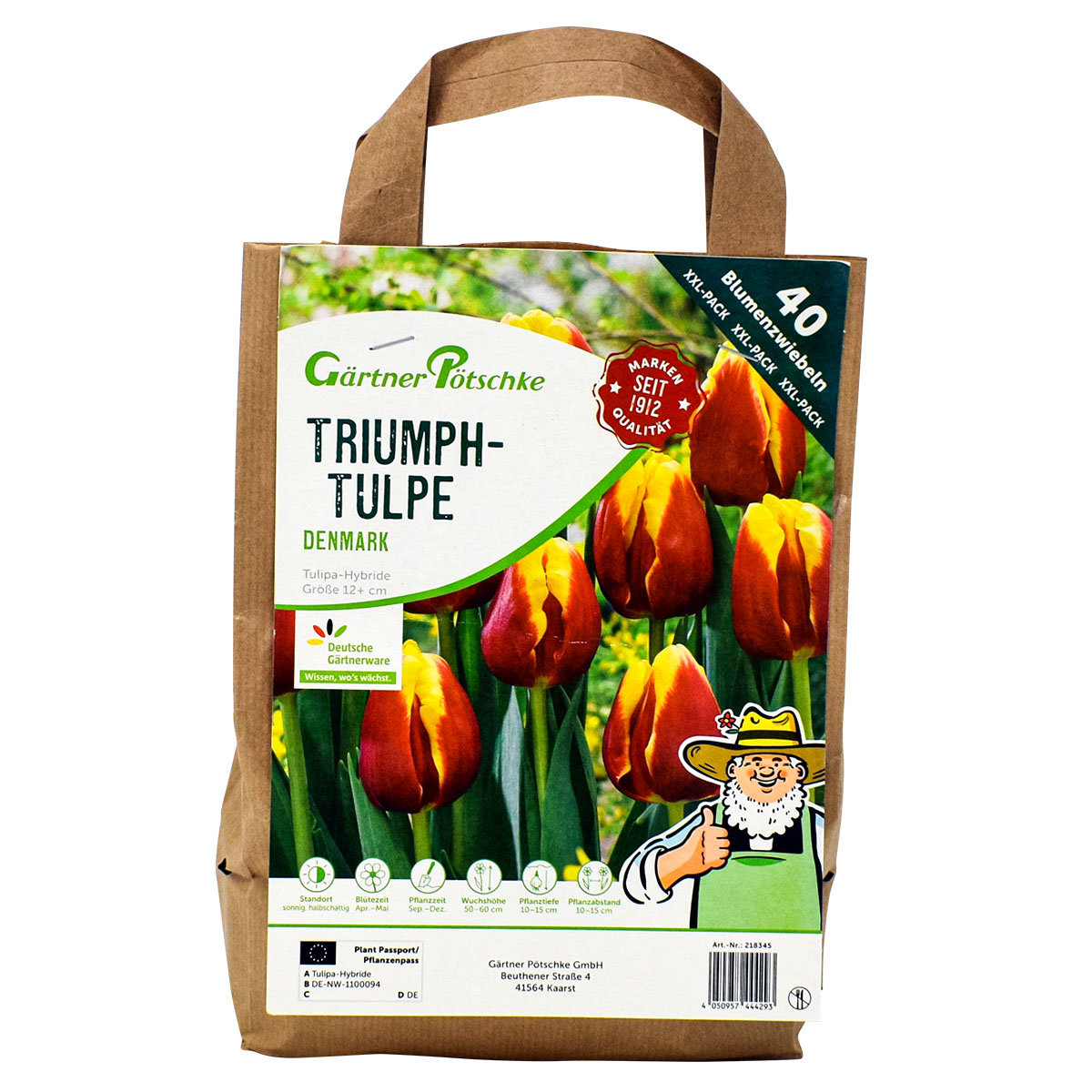 Tulpe Denmark, XXL-Pack. | #3