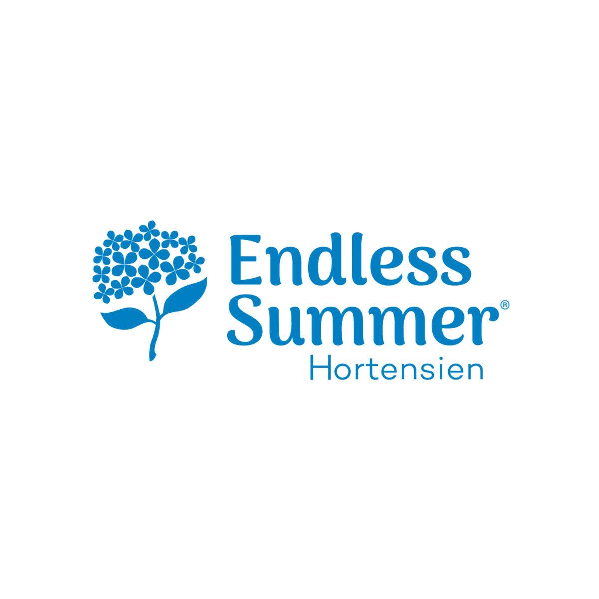 Garten-Hortensie Endless Summer® The Bride, weiß, im ca. 23 cm-Topf   #3