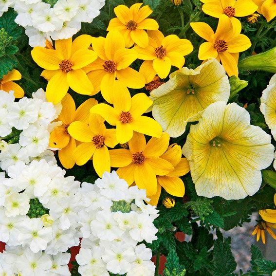 Trio-Fix Confetti Garden Sunshine   #3