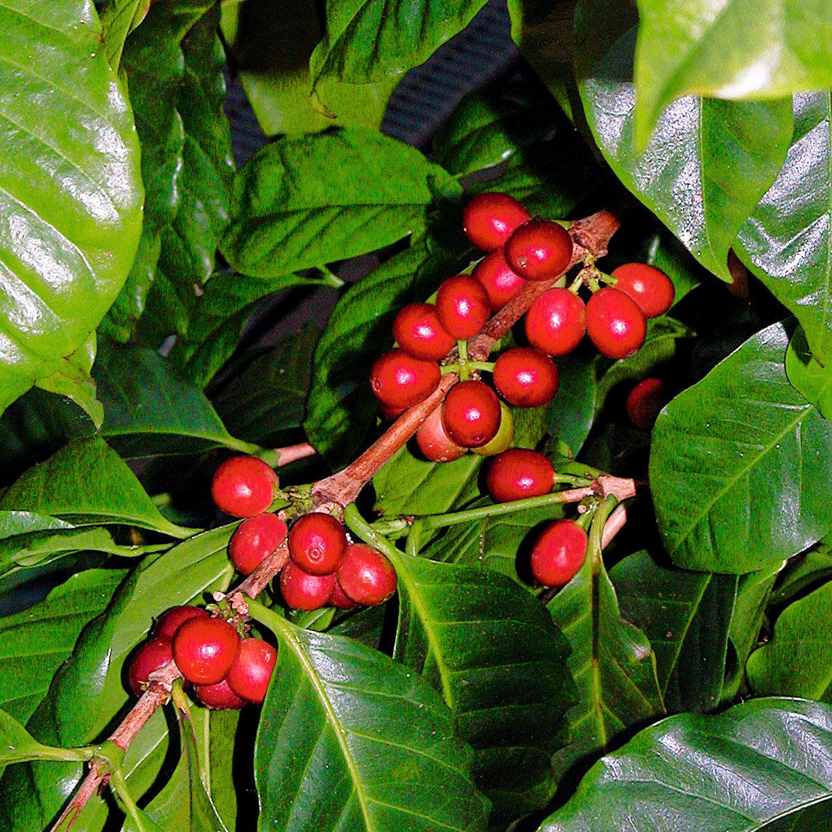 Genießer-Set Allgäuer Bergkaffee mit 4 Portionen Kaffee | #3