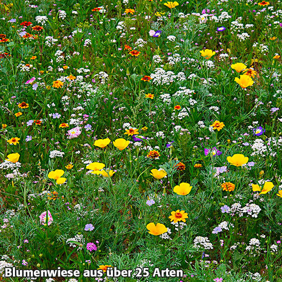 Blumen-Seedbombs Schmetterlingswiese | #3
