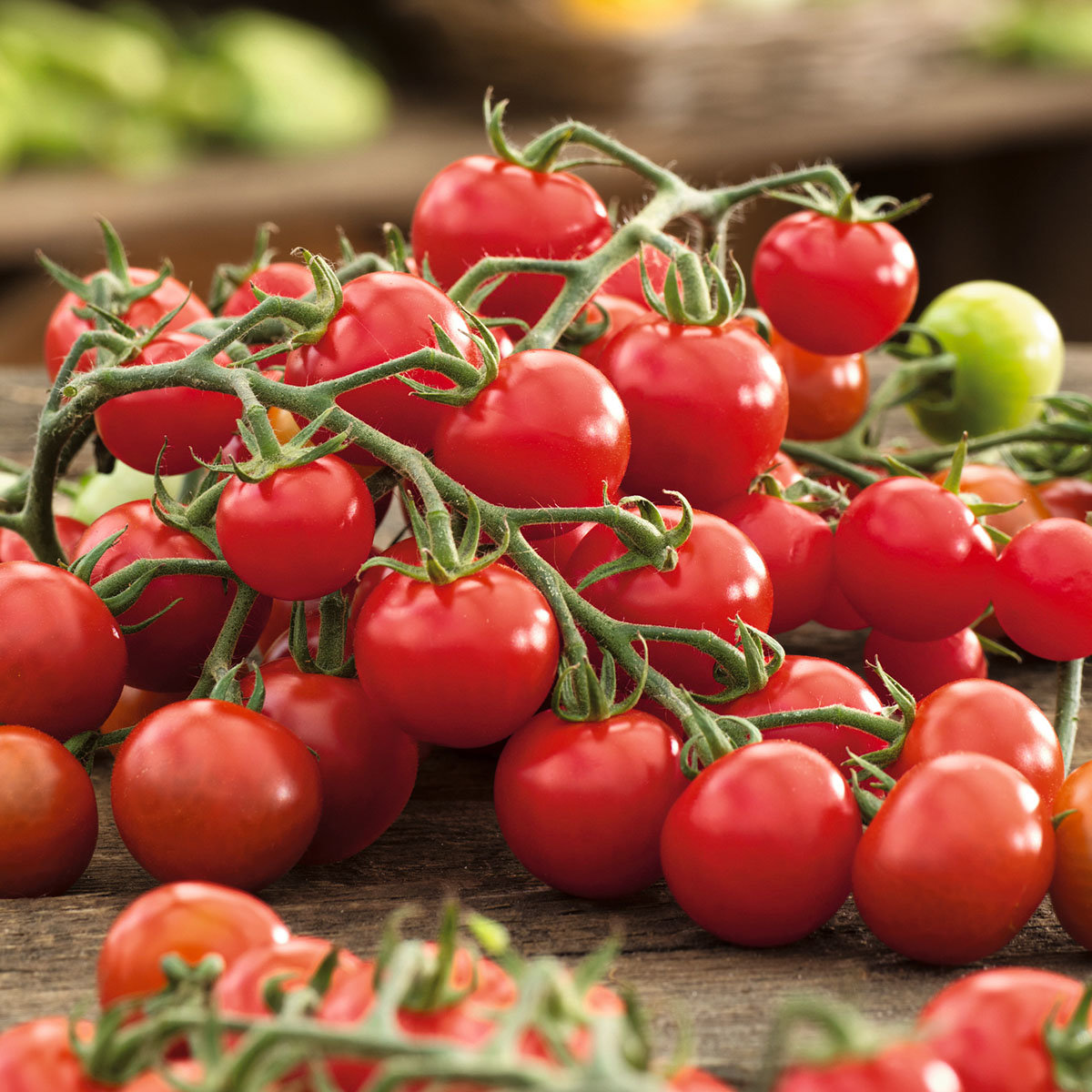 Tomatenpflanze Solena Sweet Red, veredelt, im ca. 12 cm-Topf | #4