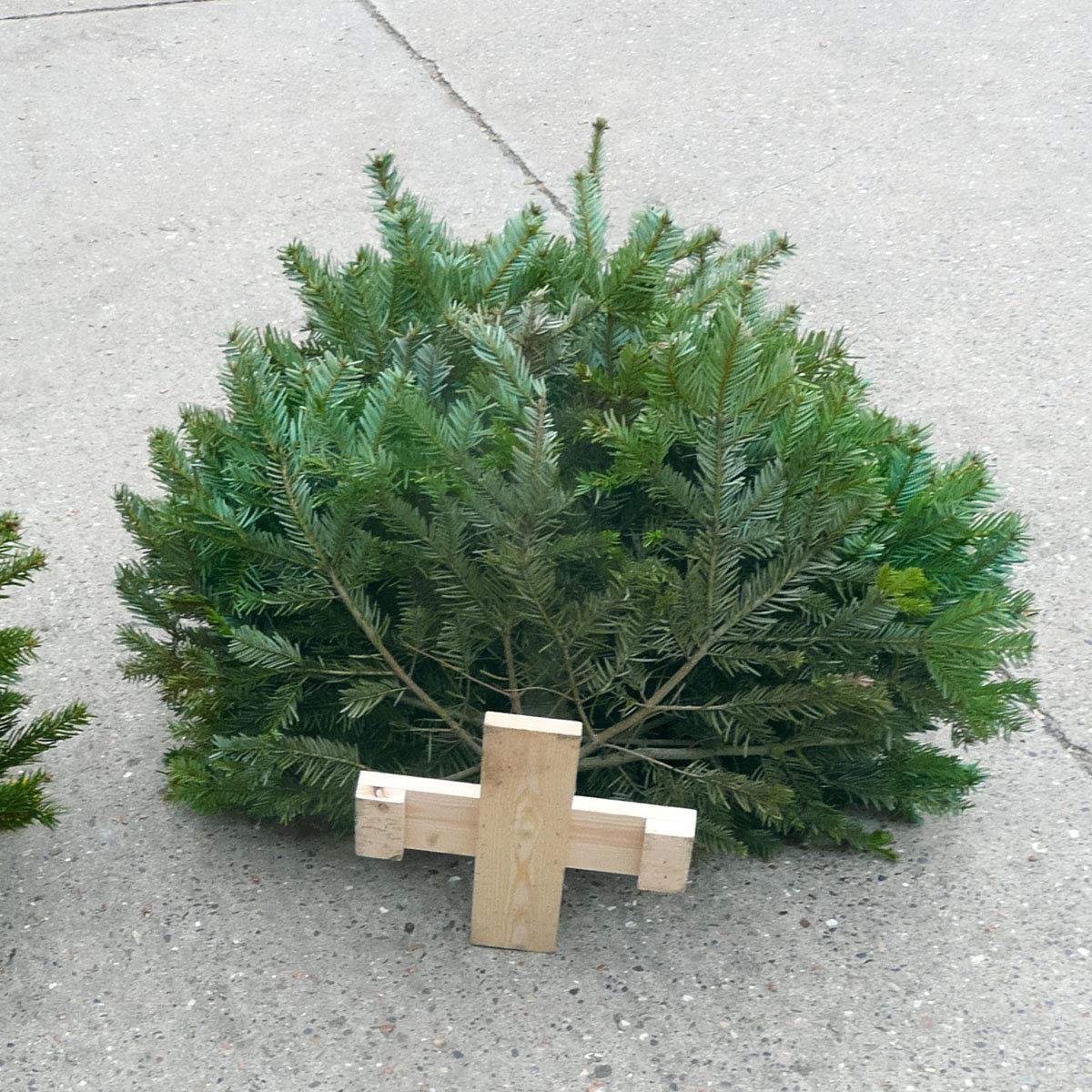 Weihnachtsbaum Nordmanntanne 60-80 cm mit Holzkreuz-Ständer | #4