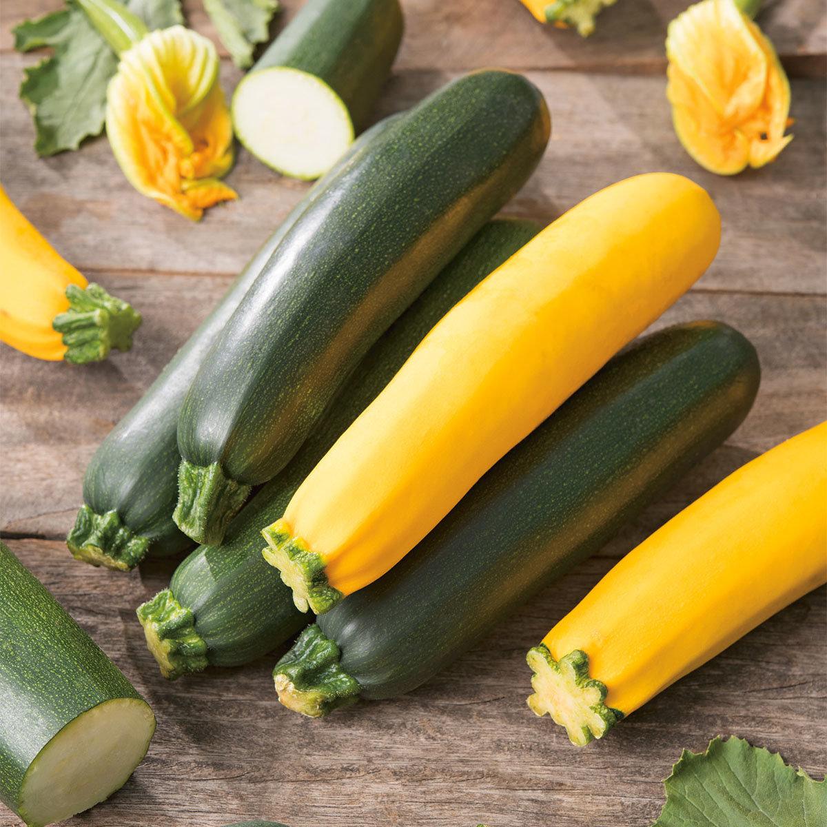Zucchinipflanze Ola Gabriella, im ca. 11 cm-Topf | #4