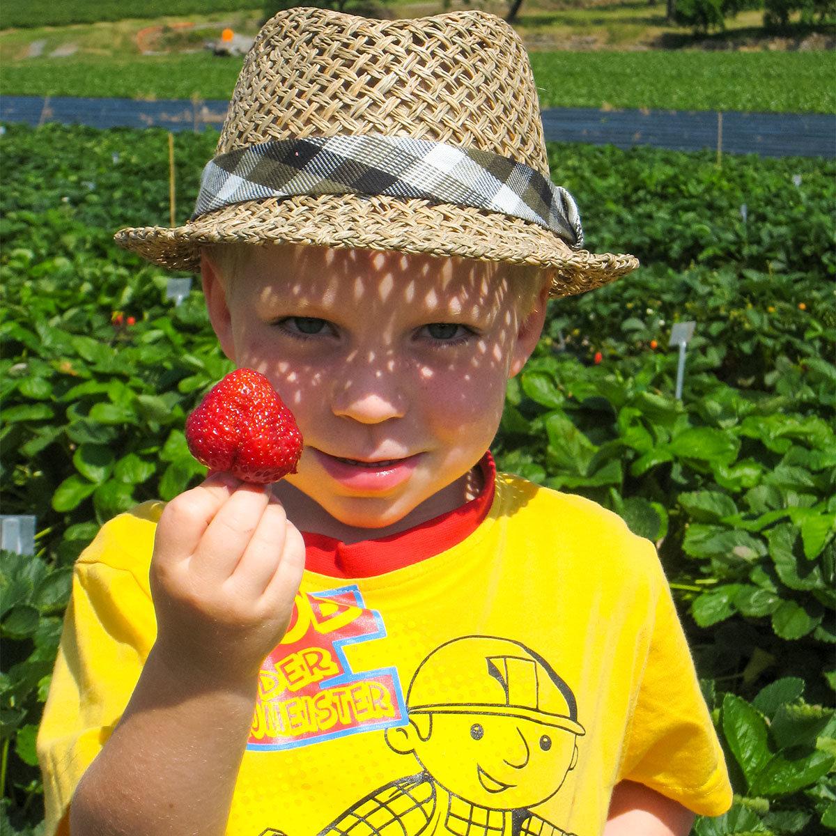 Erdbeere Herzle 12er-Set, im ca. 7 cm-Topf | #4