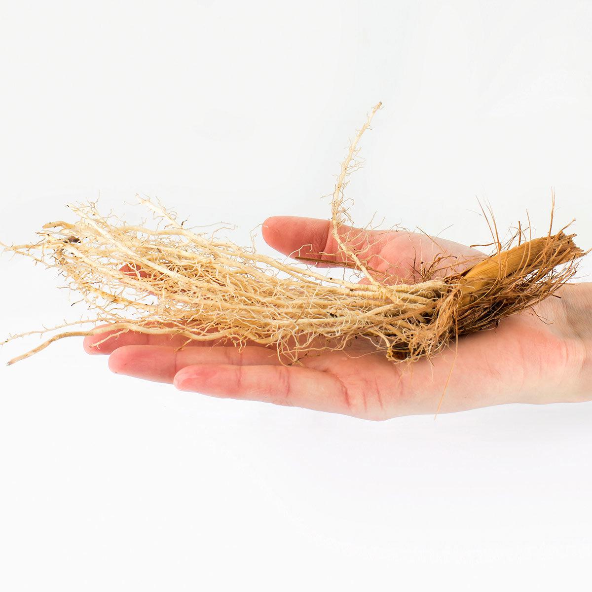 Schwertlilien-Mischung Sibirica | #4