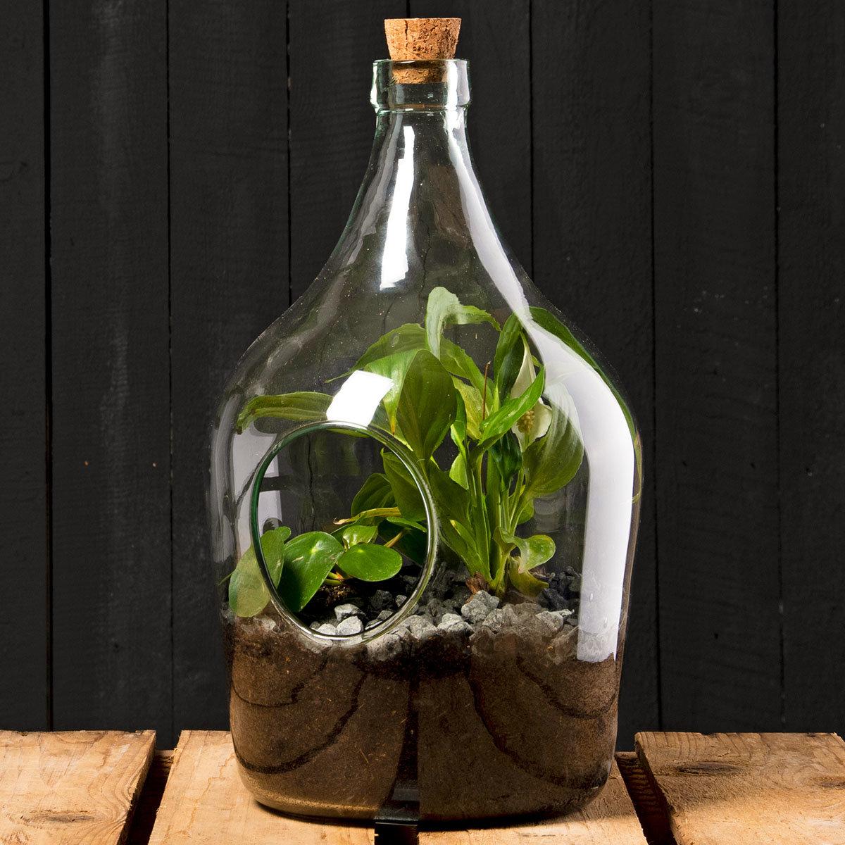 DIY Terrariumflasche mit Seitenöffnung, Komplettset, 3 Liter | #4