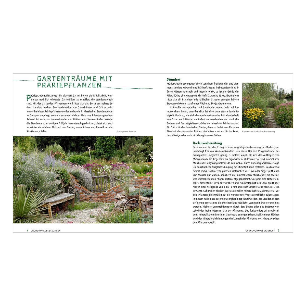 Die schönsten Pflanzen, die wenig Wasser brauchen für Garten, Balkon und Terrasse | #4
