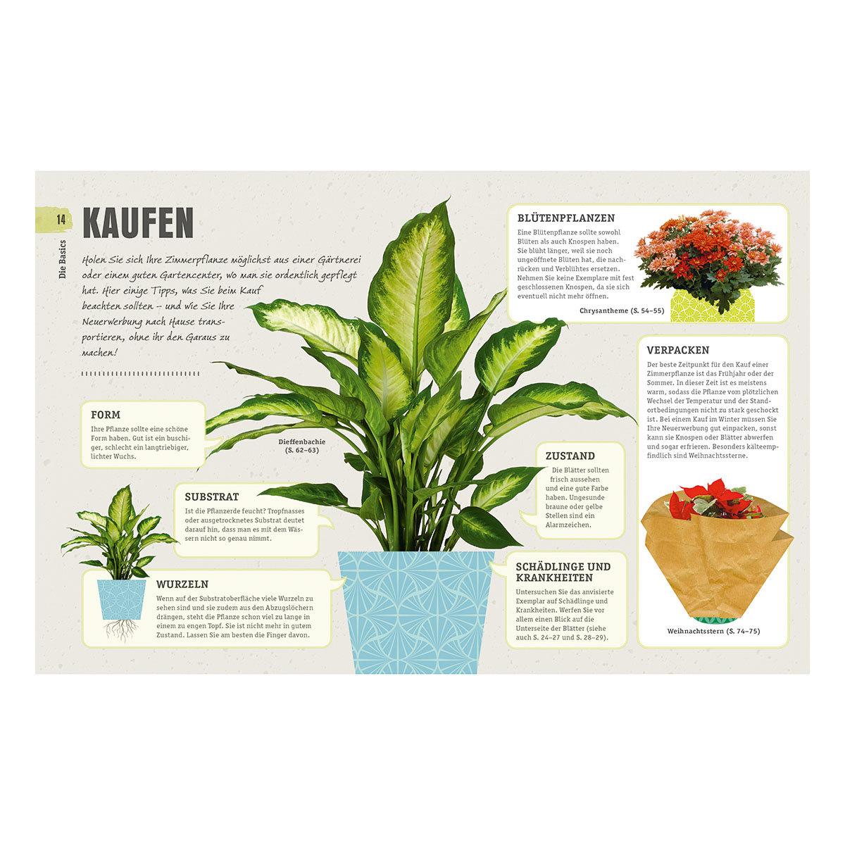So überleben Zimmerpflanzen garantiert   #4
