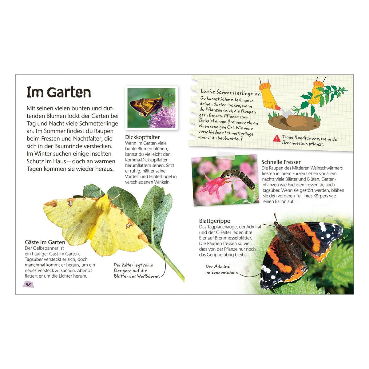 Naturführer für Kinder - Schmetterlinge   #4